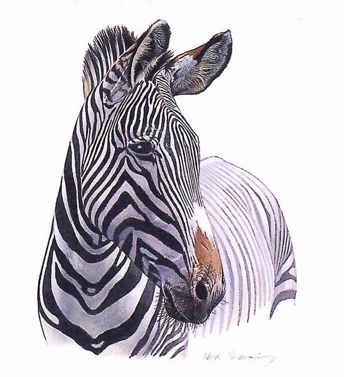 zebra head coloring